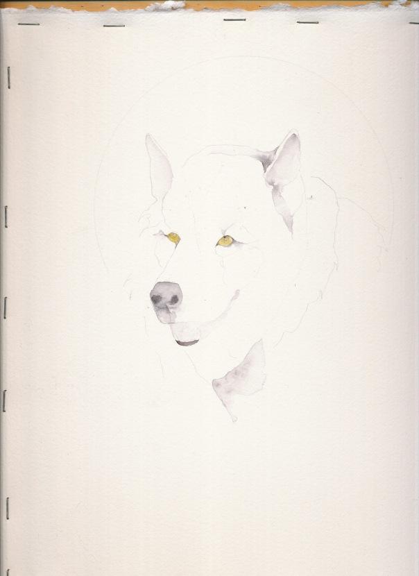 'WOLF' 1 300